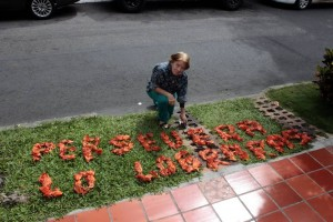 Las flores de color naranja sobresalen sobre el césped del frente de su casa.