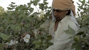 Las escenas de los cultivos de algodón fueron grabadas en el departamento del Cesar.