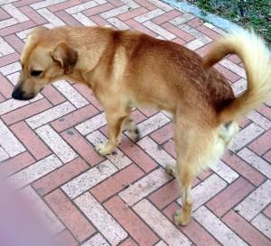 Un vecino informa que este es uno de los perros agresores. - Suministrada / GENTE DE CABECERA