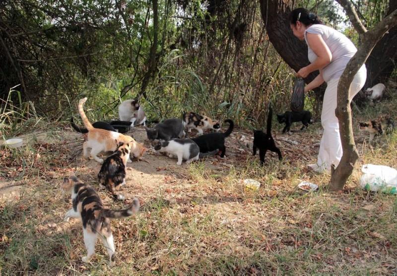 María Odilia Ramírez alimenta a cerca de 28 gatos en Pan de Azúcar
