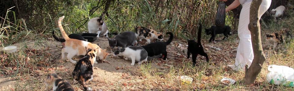 María Odilia y su amor por alimentar gatos