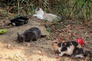 Gatos en Altos de Pan de Azúcar.