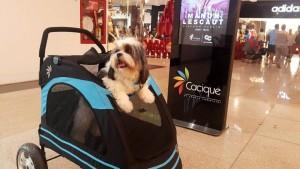Los coches paseadores pueden ser usados exclusivamente por perros que no excedan los 15 kg de peso. - Suministrada / GENTE DE CABECERA
