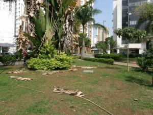 El notable mal estado de los árboles y plantas causa suciedad y desorden. - Jaime del Río / GENTE DE CABECERA