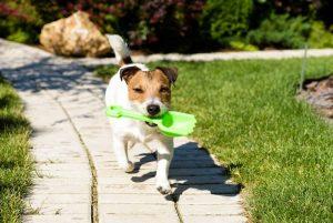 Los dueños de las mascotas buscan otras opciones para recoger las heces de sus mascotas y no perjudicar el medio ambiente.  - Banco de Imágenes /GENTE DE CABCERA