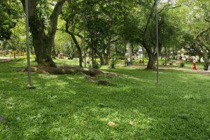 El parque San Pío alberga más de 200 árboles, entre Gallineros, Guayacanes, Ceibas y Almendros, entre otros