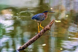 Muestra de la fauna existente en el área del parque Las Mojarras, nuevo escenario natural, cuya apertura se espera en dos meses y medio