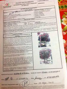 Autorización del AMB para la poda de los árboles, con fecha del 26 de mayo de 2016. - Suministrada/GENTE DE CABECERA