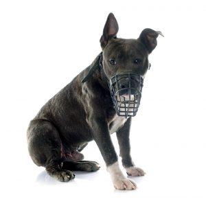 Es obligatorio el uso de bozal mientras la mascota esté en espacio público. - Banco de imágenes/GENTE DE CABECERA