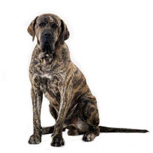 Todas las mascotas deben contar con su esquema de vacunación y desparasitación al día. - Banco de imágenes/GENTE DE CABECERA