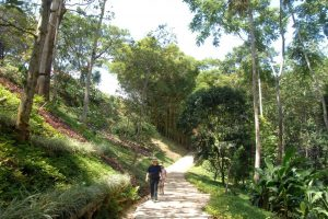 Puentes y senderos peatonales componen los 1.700 metros que los caminantes pueden recorrer mientras admiran la gran cantidad de especies de aves y plantas. - Jaime del Río/GENTE DE CABECERA