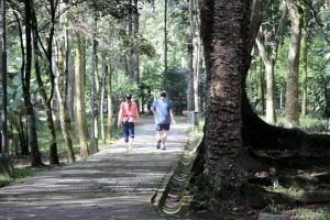 La Cdmb anunció que se pondrán cercas eléctricas para mejorar la seguridad del Parque. - Archivo / GENTE DE CABECERA