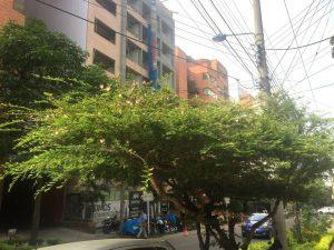 Este árbol carbonero está un poco más arriba por la misma calle 42.  - Suministrada/GENTE DE CABECERA