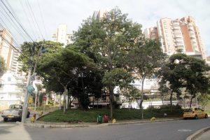 La excesiva altura de los árboles genera riesgos para los transeúntes y las viviendas aledañas. - Javier Gutiérrez/GENTE DE CABECERA