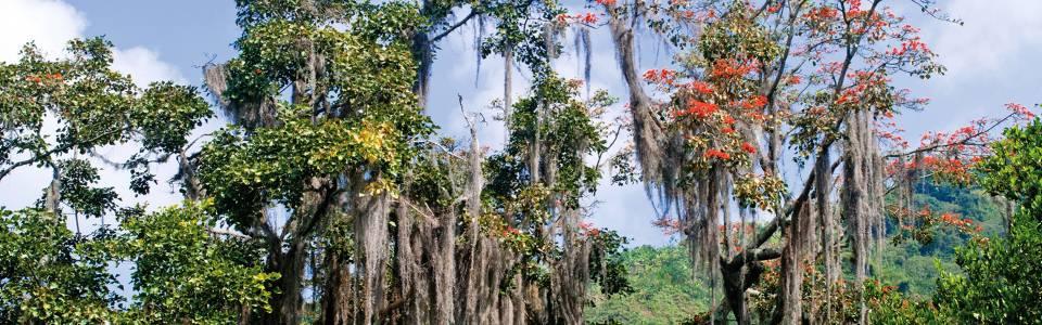 Esta iniciativa busca rescatar del olvido los árboles nativos colombianos