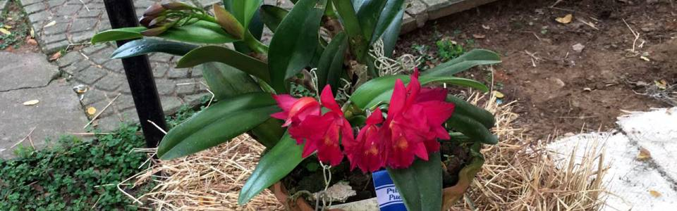 Conozca más sobre el cuidado de sus orquídeas