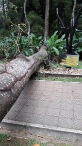 La caída de árboles que se ha presentado recientemente es motivo de preocupación para los visitantes del parque La Flora. - Suministrada/GENTE DE CABECERA