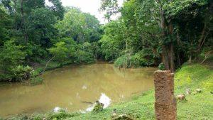 Más de 3.500 hectáreas de bosque han sido protegidas a través de estos incentivos. - Prensa Cdmb/GENTE DE CABECERA