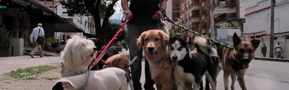 Policía adelanta operativos para la tenencia de mascotas
