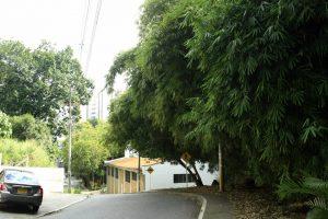 La zona boscosa en los alrededores de la parroquia Espíritu Santo precisa de mantenimiento y poda urgente. - César Flórez/GENTE DE CABECERA