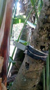Aún se desconoce quién o quiénes robaron estas bombillas en San Pío. - Suministrada / GENTE DE CABECERA