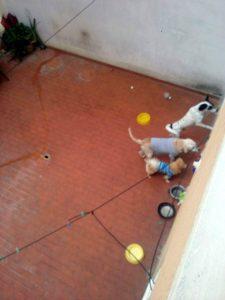 Según denuncia la residente, la falta de un buen aseo al patio está afectando a los demás residentes del edificio. - Suministrada / GENTE DE CABECERA