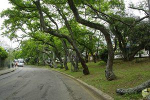 Vecinos del parque denuncian que los senderos y zonas aledañas se están convirtiendo en foco de inseguridad. - César Flórez/GENTE DE CABECERA
