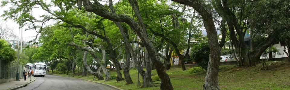 Piden más atención de las autoridades en parque Mejoras Públicas