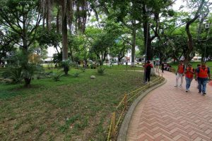 Un nuevo semblante se le ve al parque San Pío con esta siembra de prado San Agustín. - Élver Rodríguez/GENTE DE CABECERA