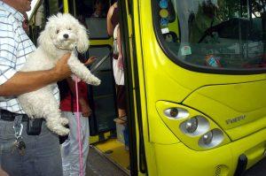 El ingreso de mascotas al Sistema está permitido desde 2011. - Archivo/GENTE DE CABECERA