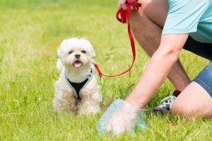 La multa para quien no recoja los excrementos de sus mascotas, o los recoja y los deje abandonados es de $98.360. - Suministrada/GENTE DE CABECERA