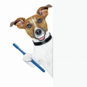 La salud dental es una parte importante del bienestar general de los animales. - Banco de Imágenes/GENTE DE CABECERA