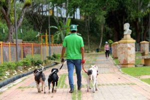 Los expertos recomiendan no llevar perros grandes con pequeños, pues al pequeño le cuesta mantener el mismo ritmo. - Elver Rodríguez/GENTE DE CABECERA
