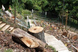 Los habitantes de Cabecera reclaman la reparación de las escaleras que comunican su barrio con Bajos de Pan de Azúcar, tras el daño causado por la caída de un árbol. - Jaime del Río/ GENTE DE CABECERA