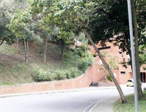 El estado de este árbol ubicado en el parque Los Leones tiene preocupados a los residentes de Cabecera. - Jaime del Río/ GENTE DE CABECERA