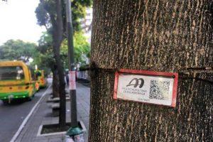 El AMB invitó a toda la ciudadanía a informar cuáles son los árboles más afectados en cada uno de sus sectores. - Archivo/GENTE DE CABECERA
