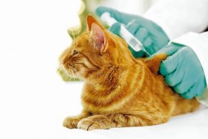 Los animales de compañía tienen hoy la oportunidad de vivir vidas más largas y saludables, en parte debido a la disponibilidad de vacunas que pueden proteger a las mascotas de enfermedades. - Banco de imágenes/GENTE DE CABECERA