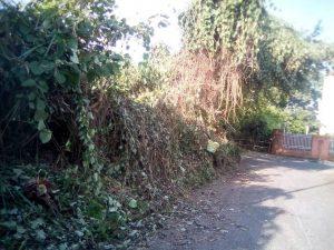 Aumento de zancudos, inseguridad y mala imagen para el barrio son algunos de los problemas que los vecinos de La Floresta reportan por la falta de poda de zonas verdes aledañas a su barrio. - Suministrada/GENTE DE CABECERA