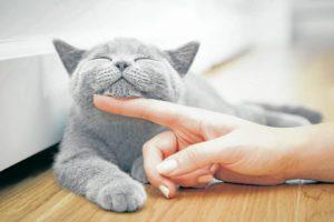 No todos los gatos están listos para que las personas los acaricien y los manipulen desde el primer momento. De hecho, algunos ni estarán listos para tener a nadie cerca. - Banco de imágenes/GENTE DE CABECERA
