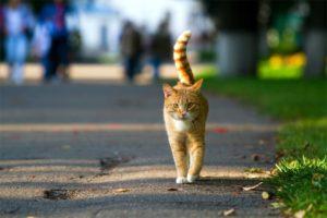 Algunas de las enfermedades que pueden adquirir los gatos domésticos cuando salen a la calle son el sida felino, la leucemia felina, el moquillo y los parásitos como las pulgas y garrapatas. - Banco de Imágenes / GENTE DE CABECERA