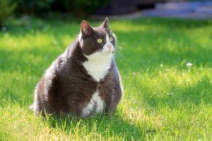 De acuerdo con los expertos, el sobrepeso se registra con más frecuencia en perros y gatos entre los 2 y 5 años de edad. - Banco de Imágenes / GENTE DE CABECERA