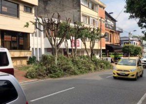 """Los vecinos de la carrera 36 con calle 54 mostraron su descontento con la poda """"excesiva"""" de los árboles de ese sector. - Suministrada / GENTE DE CABECERA"""