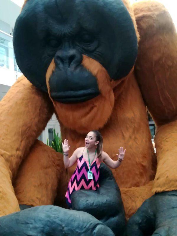 Los ojos del gorila gigante se abrirán hoy, 5 de abril, en el Centro Comercial Cañaveral. - Suministrada / GENTE DE CABECERA