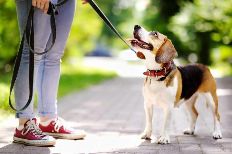 La situación se registra cuando los vecinos pasean sus mascotas frente al local comercial de una residente del sector. - Banco de Imágenes / GENTE DE CABECERA