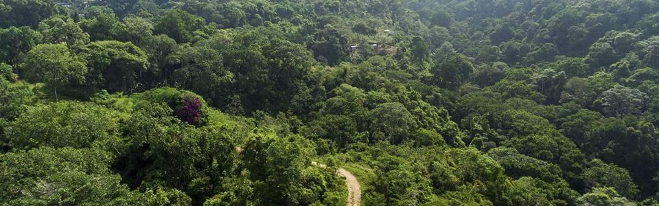El 'Bosque de los Caminantes' se construirá  en los Cerros Orientales