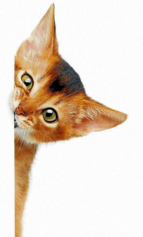 La experta ofrece algunas recomendaciones para evitar que los felinos adquieran esta enfermedad. - Banco de Imágenes / GENTE DE CABECERA