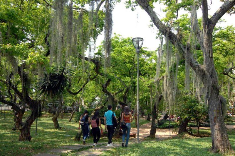Los árboles elegidos se darán a conocer en las redes del AMB, después de cerrada la convocatoria. - Archivo / GENTE DE CABECERA