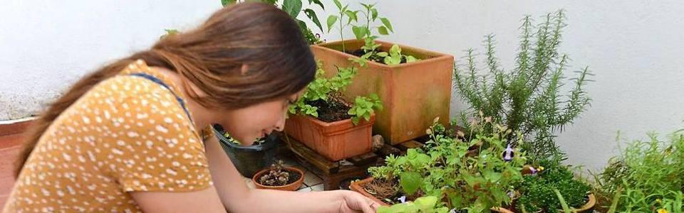 """""""Cultivando Vida"""", el arte de la agricultura urbana"""