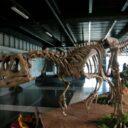 Dinosaurios De la Patagonia: En 2010 Neomundo estará en la lista de planes por hacer