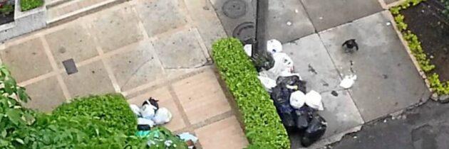 Chulos por la basura